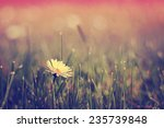 daisy flowers | Shutterstock . vector #235739848
