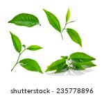 green tea leaf isolated on... | Shutterstock . vector #235778896