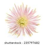 flower isolated on white...   Shutterstock . vector #235797682