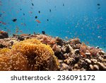 myriad of reef fish swimming... | Shutterstock . vector #236091172
