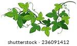 illustration of a close up ivy