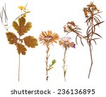 set of wild dry pressed flowers ... | Shutterstock . vector #236136895