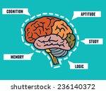 capabilities of the human brain.... | Shutterstock .eps vector #236140372