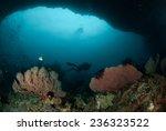 diver  sea fan in ambon  maluku ... | Shutterstock . vector #236323522