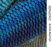 Close Up On A Fish Skin   Blue...