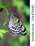 Beautiful Paper Kite Butterfly  ...