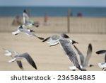 Seagull Flying On Ocean City...