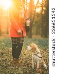 Stock photo woman in park holding coffee to go and walking with her beagle dog 236651542