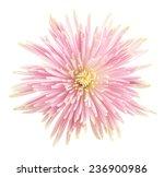 flower isolated on white...   Shutterstock . vector #236900986