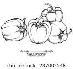 sweet pepper. vector hand drawn ... | Shutterstock .eps vector #237002548