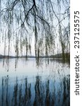 weeping willow silhouettes on... | Shutterstock . vector #237125575