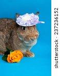big brown rabbit in small... | Shutterstock . vector #237236152