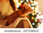 Red Cat At Home In Christmas...