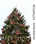 Small photo of Norway spruce (Picea abies) as the Prague (Czech Republic) Christmas tree.