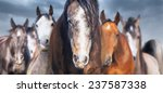 Herd Of Horses Close Up  Banner