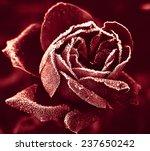 Red Rose Marsala Color Under...