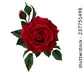 Red Rose Isolated On White Wit...