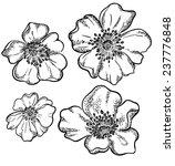 vector contour flowers... | Shutterstock .eps vector #237776848
