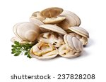 Clams Isolated On White...