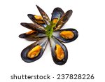 mussels isolated on white... | Shutterstock . vector #237828226