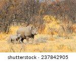 Mother Black Rhino With Calf I...