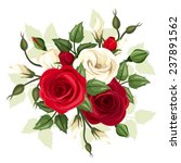 red and white roses and...   Shutterstock .eps vector #237891562