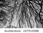 autumn trees   crossed branches ... | Shutterstock . vector #237913588