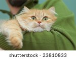 Red Cat With Green Eyes On Man...