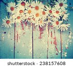 Summer Or Spring Daisy Flowers...