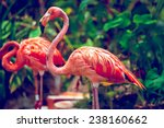 pink flamingo close up in... | Shutterstock . vector #238160662