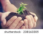 hand and plant  | Shutterstock . vector #238163305