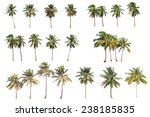 difference of coconut tree... | Shutterstock . vector #238185835