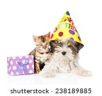 Stock photo bengal cat and biewer yorkshire terrier puppy with birthday hat and gift box isolated on white 238189885