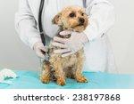 Stock photo dog get a checkup at the vet 238197868
