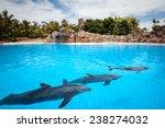Speech Dolphins Canary Islands...