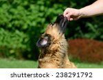Brown Dog Gets Treats