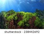 Small photo of Sea algae