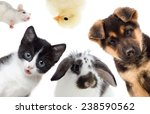 Stock photo puppy and kitten and rabbit and bird and rat 238590562