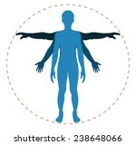 human body structure in vector | Shutterstock .eps vector #238648066
