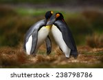 King Penguin Couple Cuddling I...