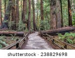 hiking path though the redwood... | Shutterstock . vector #238829698