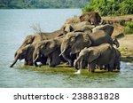 Herd of elephants drinking water in Queen Elizabeth National Park, Uganda - stock photo