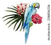 parrot  hibiscus  watercolor | Shutterstock .eps vector #238856236
