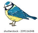 vector illustration bird... | Shutterstock .eps vector #239116348