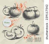 set of hand drawn tomato.... | Shutterstock .eps vector #239117542