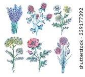 watercolor vintage beauty... | Shutterstock .eps vector #239177392