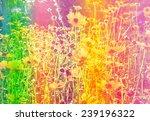 flower background. beautiful... | Shutterstock . vector #239196322