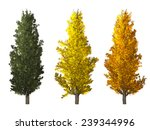 Set Of Populus Nigra Tree...