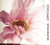 A Close Up Of A Flower With...