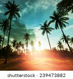 palm plantation on tropical... | Shutterstock . vector #239473882